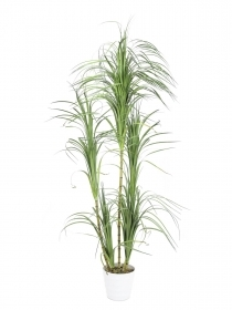 EUROPALMS pianta artificiale  Dracena , 215 cm