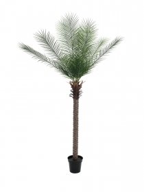 EUROPALMS pianta artificiale Phoenix deluxe, 220 cm